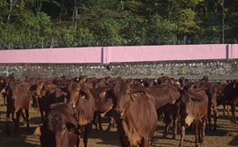 Animal Breeding Farm, Kalsi
